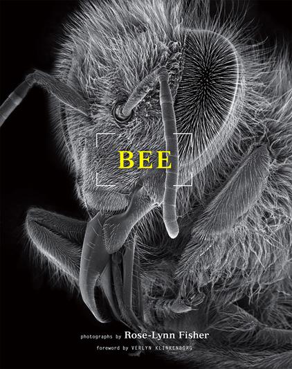 Book Cover Images Api ~ Anatomia di un ape internazionale
