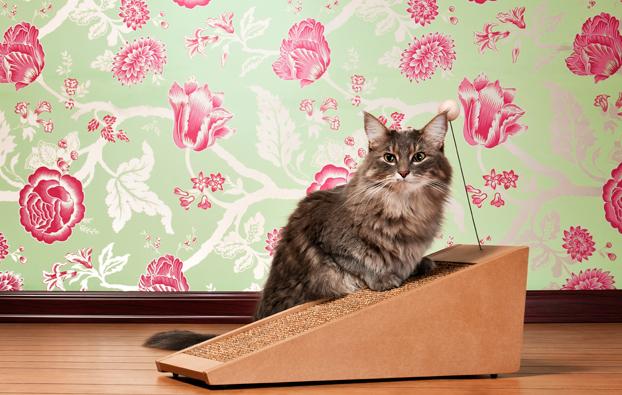 Internazionale individuata la causa dell allergia ai gatti - L allergia porta sonnolenza ...