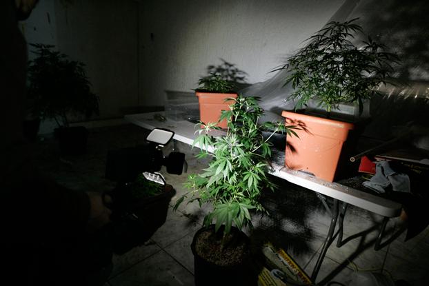 depenalizzazione droga